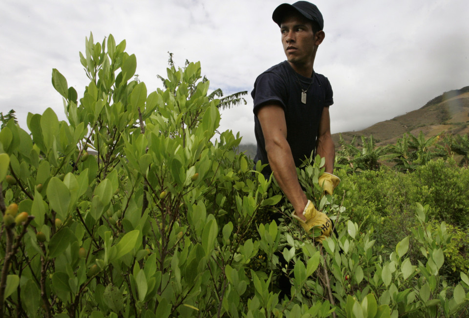 A worker helps to eradicate a coca leaf plantation as part of a government counter narcotics program in El Penol southern Narino province, August 14, 2007. After seven years of fumigating illicit drug crops from the air, Colombia recently announced it will now focus more on manual eradication of the plants used to make cocaine.   REUTERS/Jose Miguel Gomez   (COLOMBIA) - RTR1SS7A