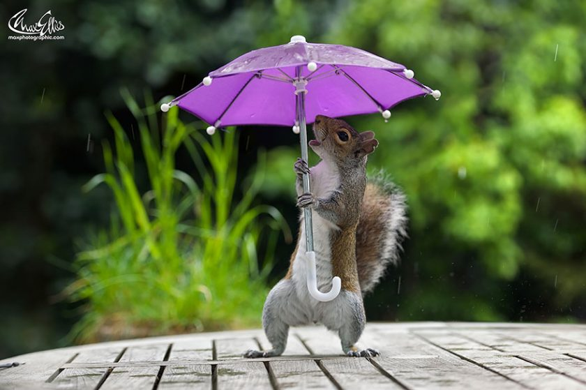 Ženska vjeverica kako