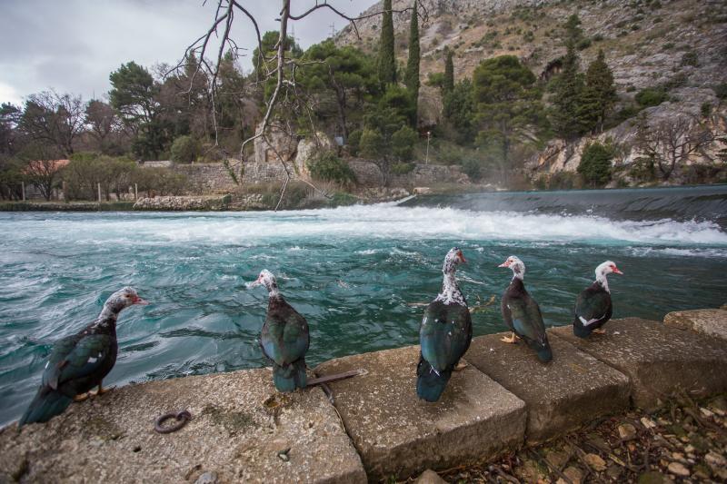 25.02.2015., Komolac, Dubrovnik - Izvor rijeke Omble i izvor pitke vode za grad Dubrovnik.  Photo: Grgo Jelavic/PIXSELL