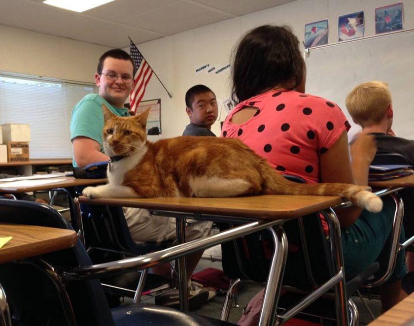 ćelav maca galerija