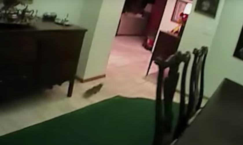 Snimke o vjevericama