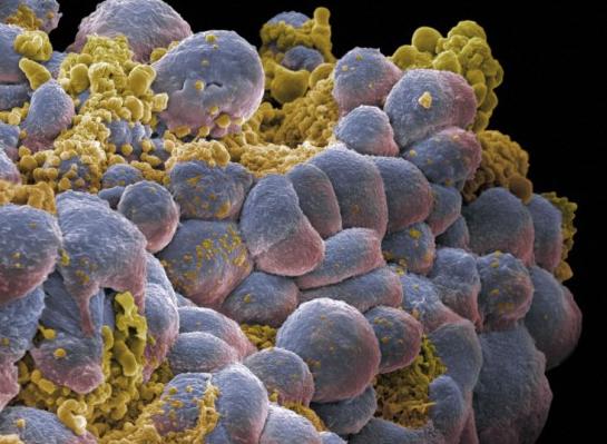 stanice raka1ž