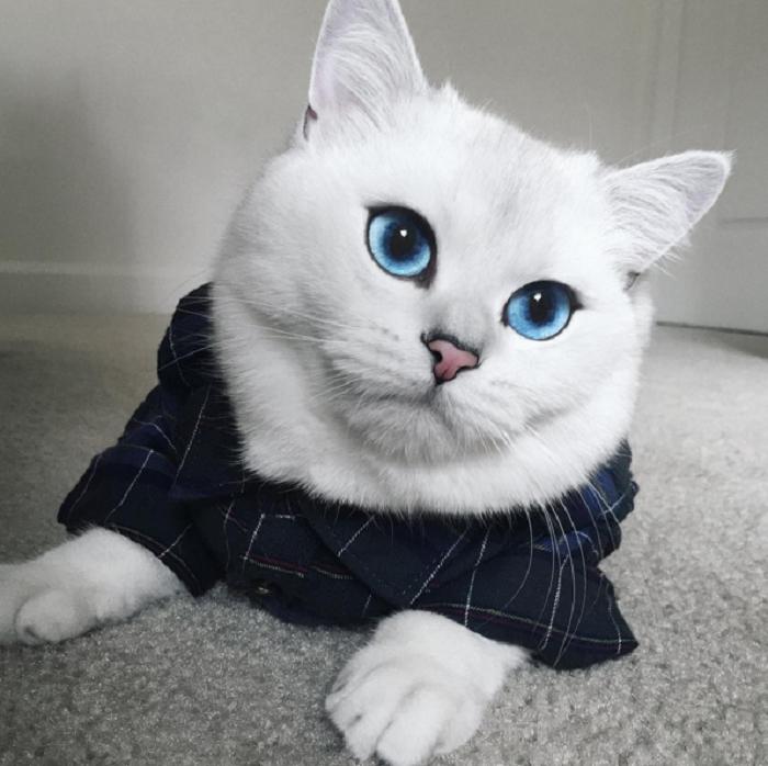širi fotografije maca besplatno lesben pron