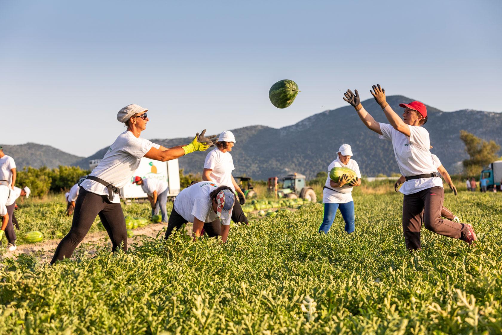 Kaufland domaće lubenice neretva