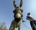 A man stands next to his donkey before a traditional donkey race in the village of Sakule, 40 kms (25 miles), north of the Serbian capital Belgrade on March 20, 2010.   AFP PHOTO / Andrej ISAKOVIC / AFP PHOTO / ANDREJ ISAKOVIC