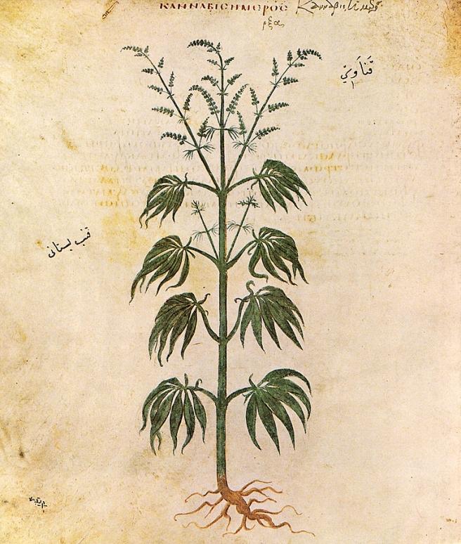 kanabis-slika-512-g-wikipedija