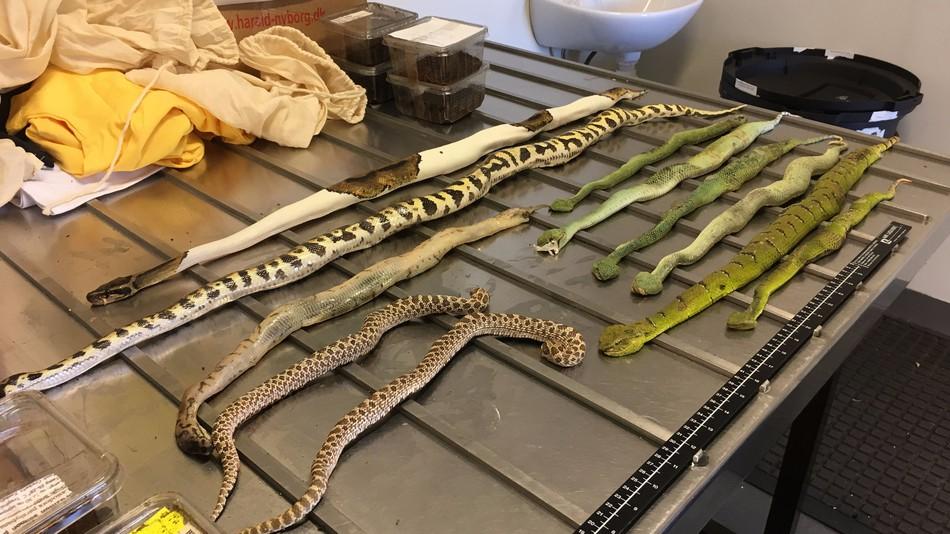 Kome treba ovoliko zmija?