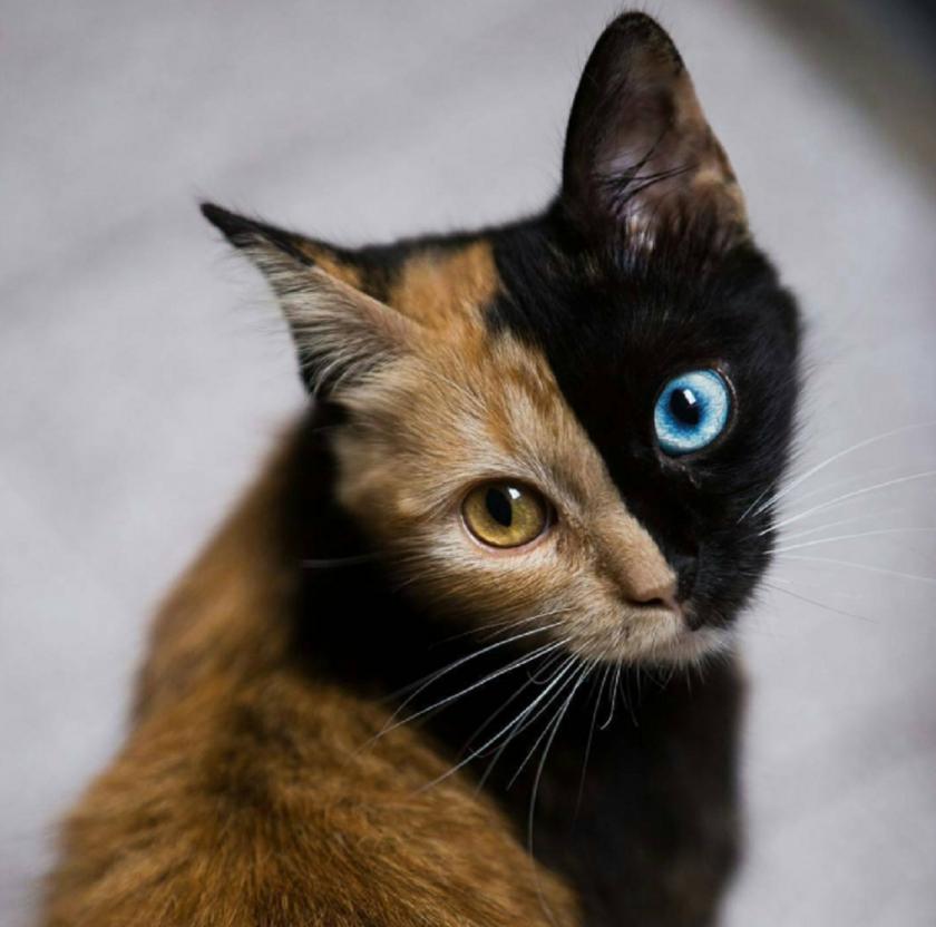 Stara stara crna maca
