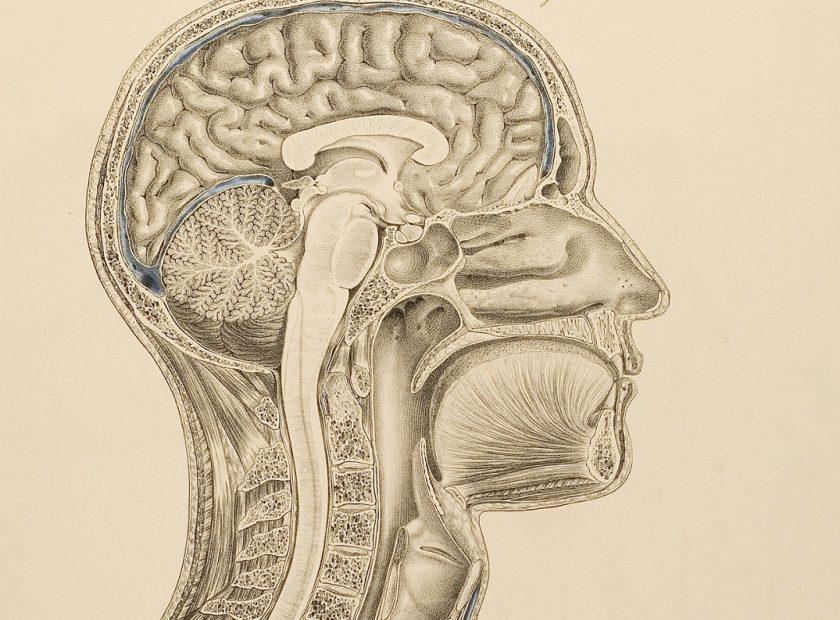 Pretraživanja za pronalazak mozga