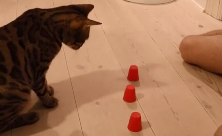 igre crnih maca igrati lezbijske seksualne igre
