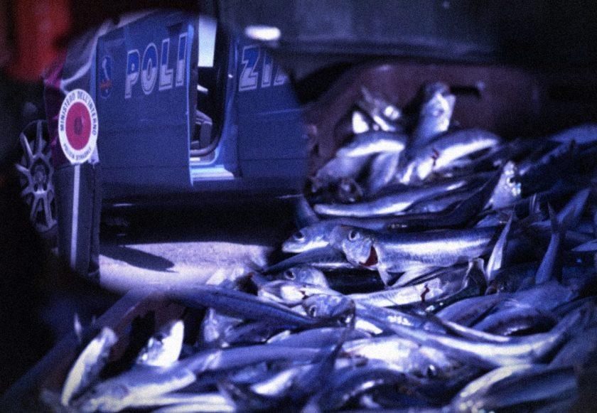 online velike ribe web mjesto za upoznavanje s vukovima