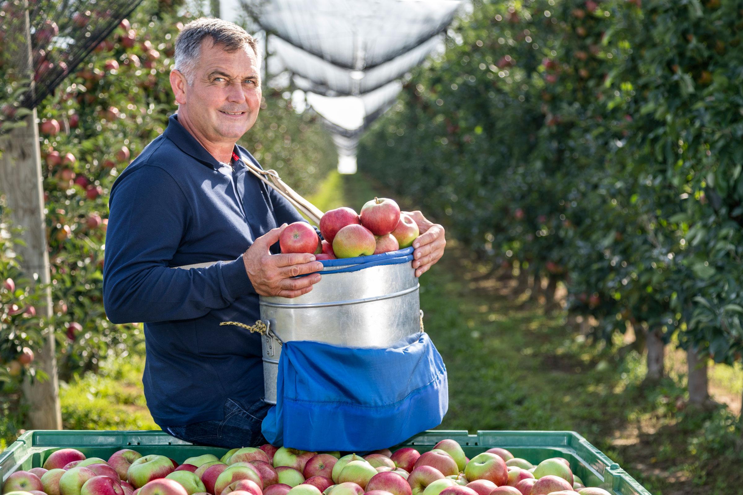 Domaće jabuke OPG Čeh iz Međimurja proizvodi za Kaufland