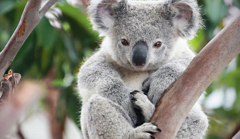 100 australskih stranica za upoznavanje