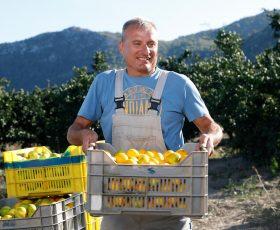 Urod mandarina ove će godine biti rekordan. Dolina Neretve ih je prepuna, a mi smo posjetili OPG Nikice Sršena odakle stižu najslađe sorte