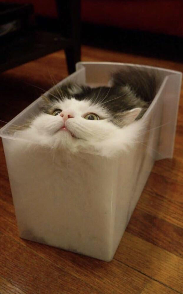 Kutija puna mačke