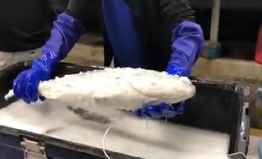 online velike ribe