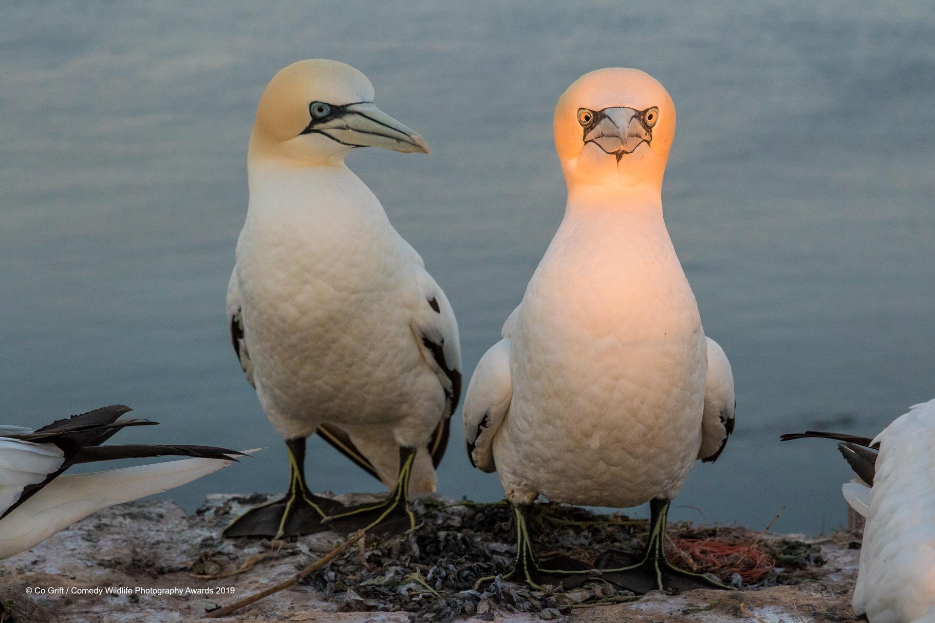 Dvije blune na njemačkom arhipelagu Heligolandu, jedna malo bijesnija od druge. Snimio ih je Co Grift