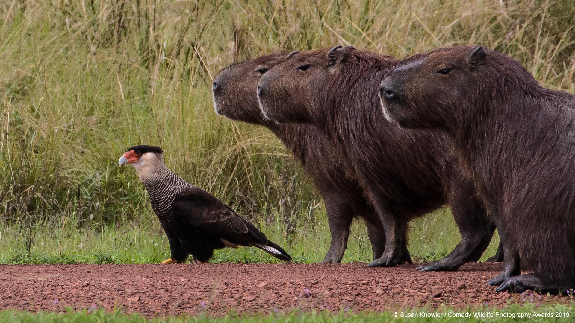 Vodenprasad i ptičica gledaju u daljinu; snimila Susan Knowler