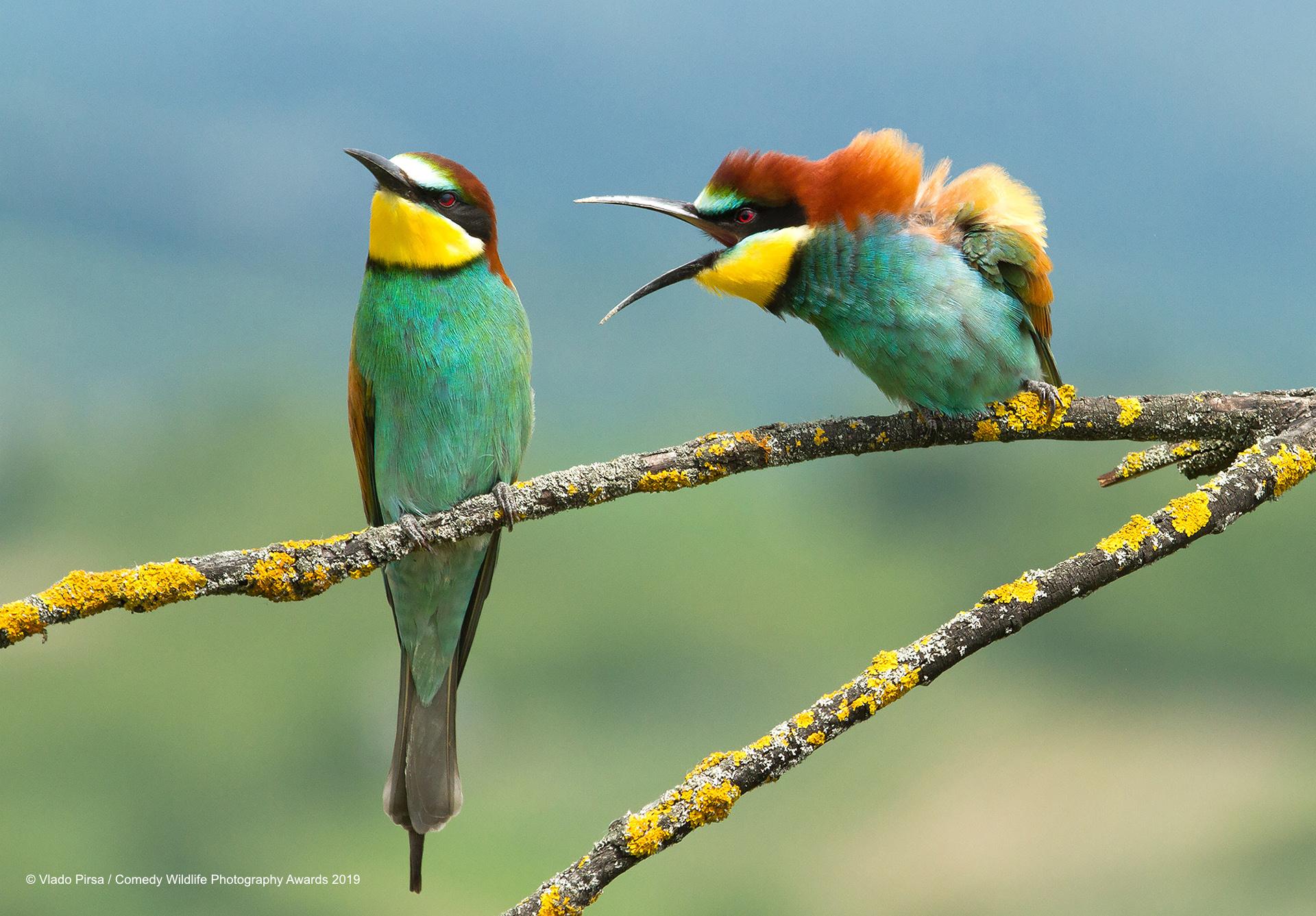 Scenu svađe između dvije ptice snimio je Vlado Pirsa, negdje u Hrvatskoj