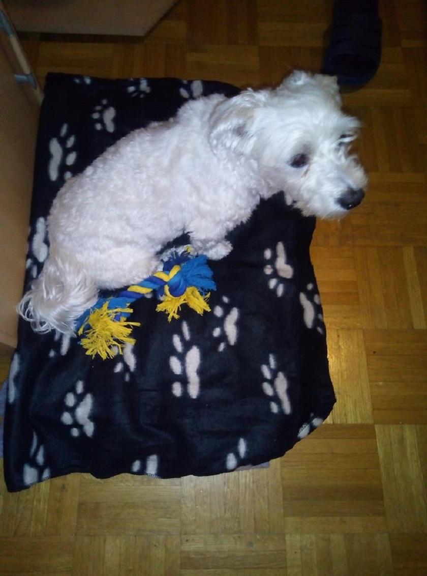 Bobi, 10 godina, Zagreb
