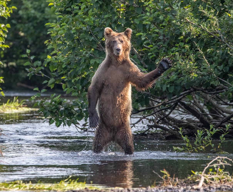 'Bok ekipa', fotka ERica Fishera snimljena na Aljasci.