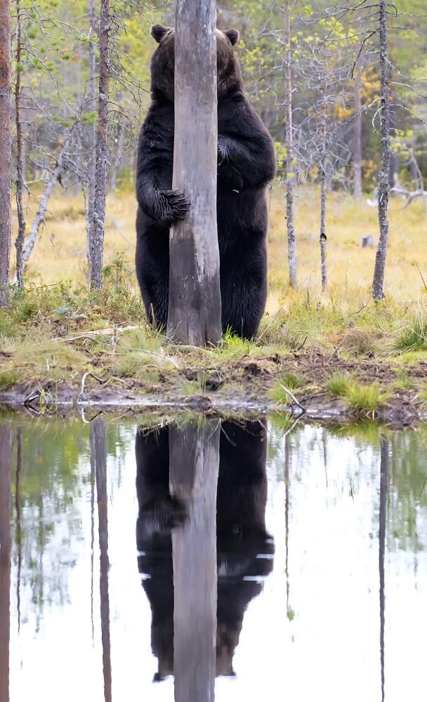"""""""Stopi se, stopi se""""- Fotografija Ese Eingbom snimljena u Finskoj."""