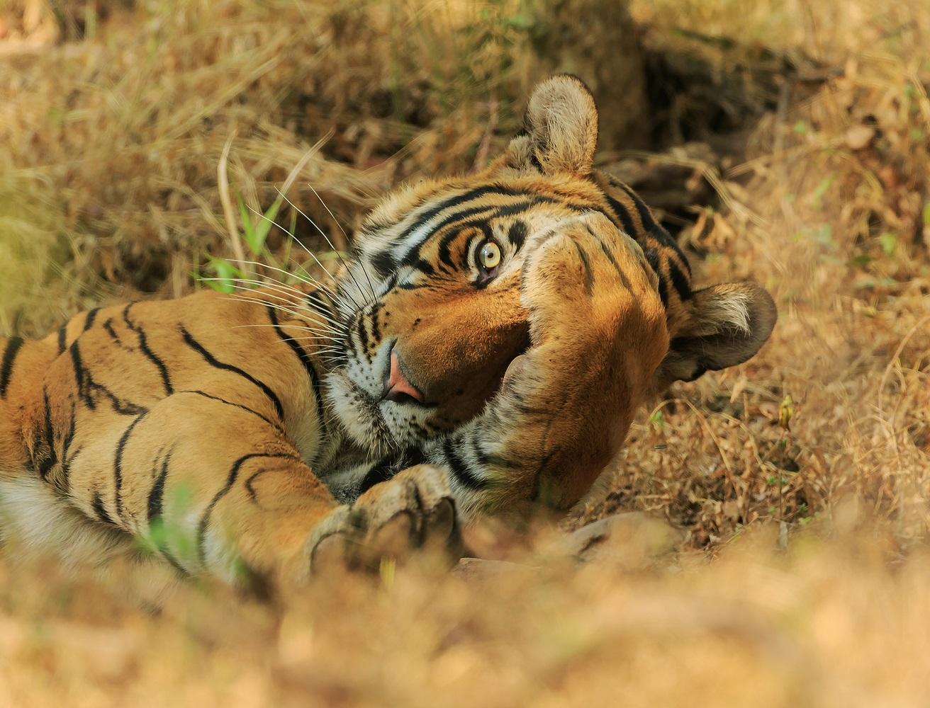 Fotografija 'Kukuc' fotografa Jagdeepa Rajputa snimljena u Indiji.