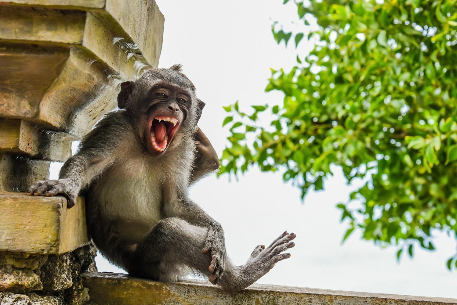 Fotografija 'Namještanje za fotku' fotografa Luisa Martija snimljena na Baliju.