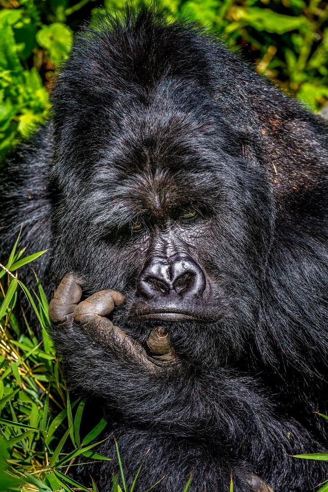 Fotografija 'Dosada' Marcusa Westberga snimljena  u Ugandi.