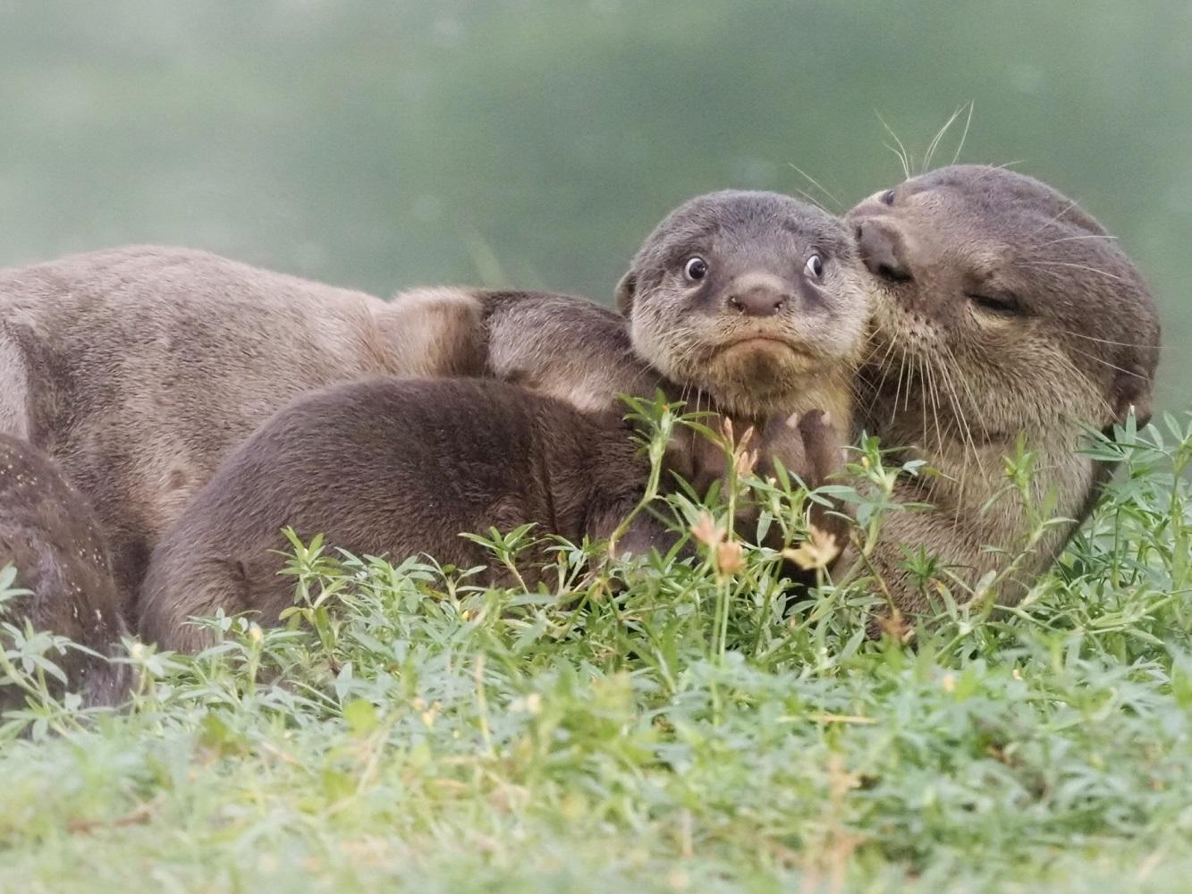 'Hey lil' mama lemme whisper in yout ear'. Fotografija Maxa Tea snimljena u Singapuru.