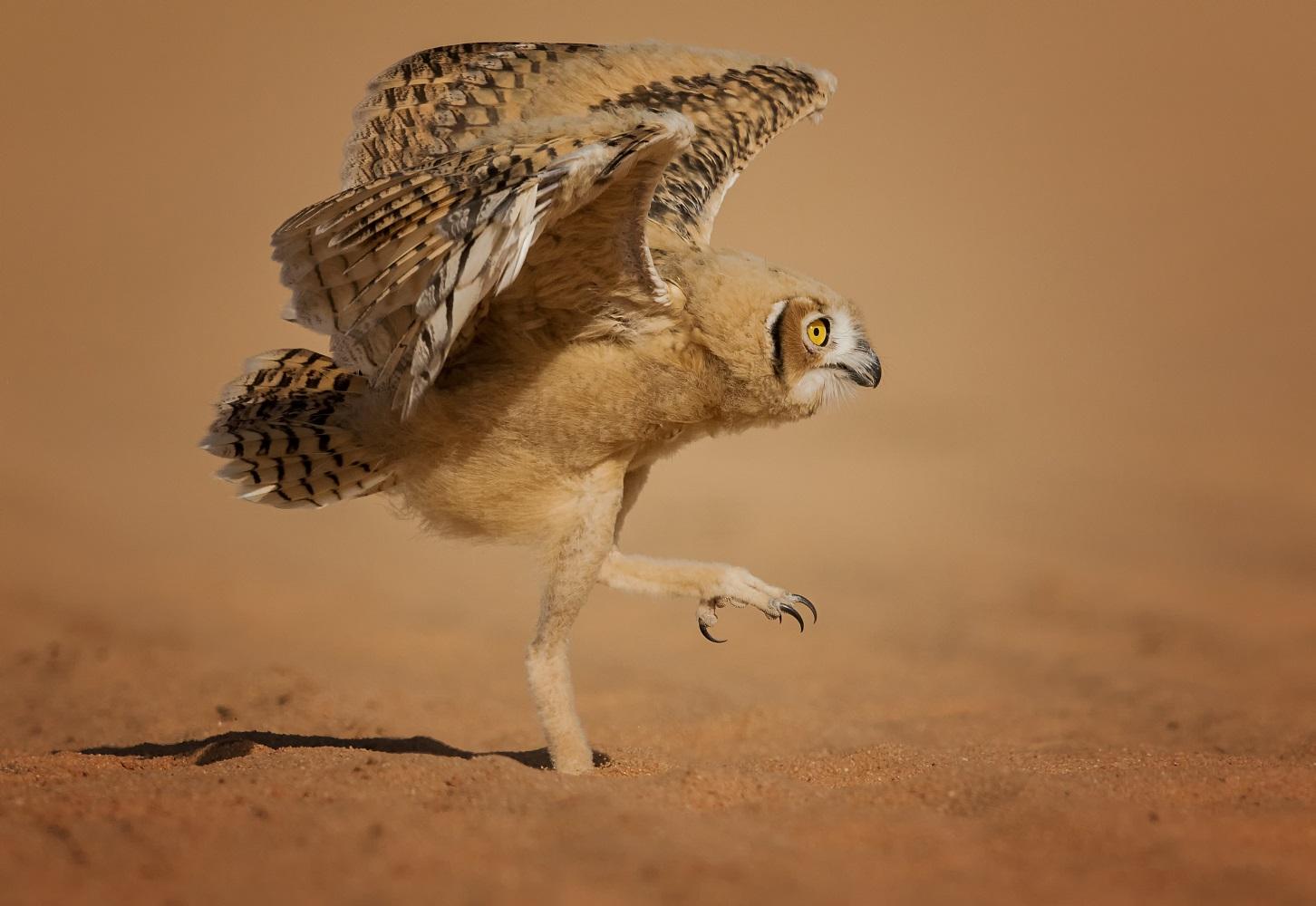 Fotografija 'Kako se leti' fotografa Nadera Alshammarija snimljena u gradu  Sakaka Al-Jouf u Saudijskoj Arabiji-