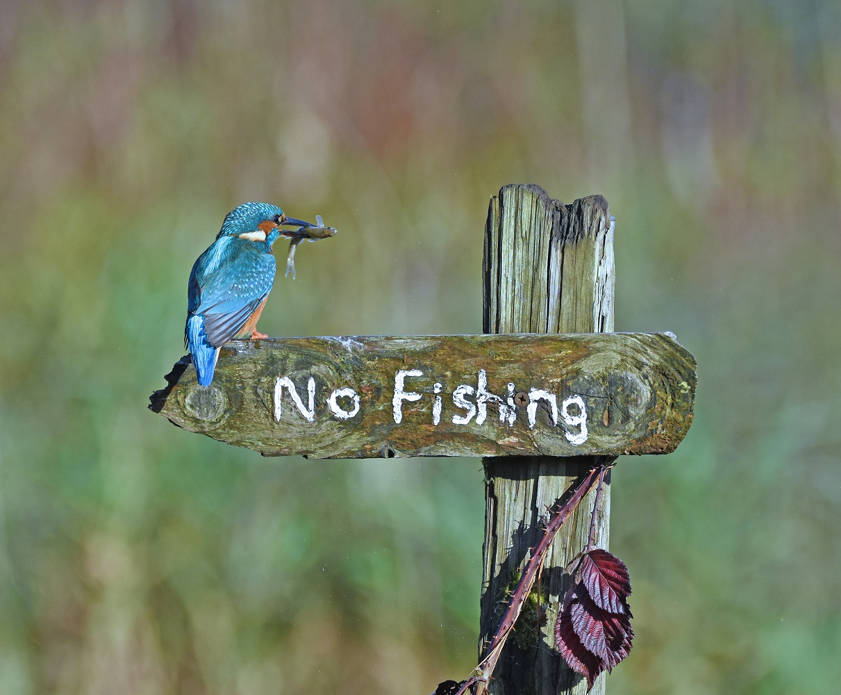 """'Ptica rugalica"""" fotografkinje Sally Lloyd Jones snimljena  u Škotskoj."""