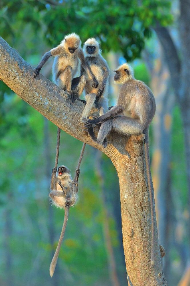 Fotografija 'Zabava za sve uzraste' fotografa Thomasa Vijayana snimljena u Indiji.
