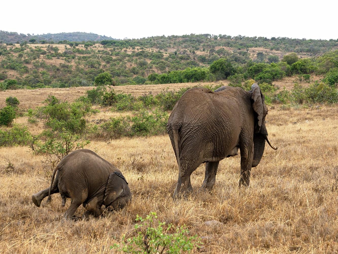 Svi nekad 'zaronimo' na nos. Fotografija Tima Hearna snimljena u Namibiji.