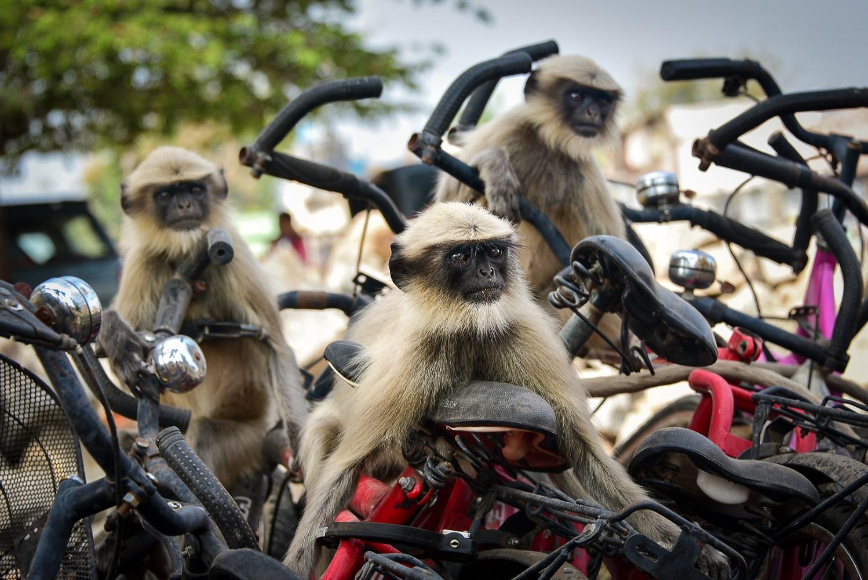 'They see us rollin, they hatin'. Fotografija Yevhena Samuchenka snimljena u Indiji.